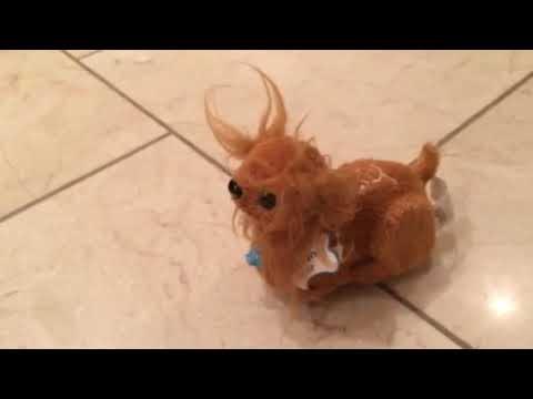 Zhu Zhu Puppies - Murphy Review