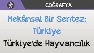 Mekânsal Bir Sentez: Türkiye - Türkiye'de Hayvancılık