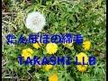 【オリジナル曲】 たんぽぽの綿毛 -TAKASHI LLB-