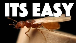 How To Catch A Queen Ant | Tips & Tricks