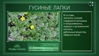 Травы Крыма. Выпуск 29. ГУСИНЫЕ ЛАПКИ