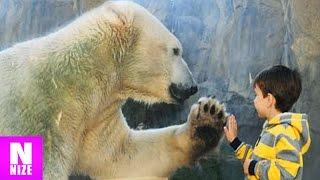 10 Menschen Die Im Zoo In Das Tiergehege Gefallen Sind!