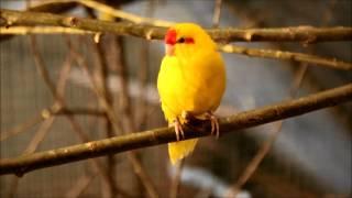 Где купить здорового попугая?.wmv(, 2012-11-29T14:12:19.000Z)