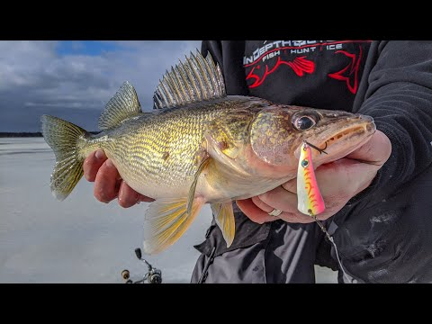 Non-Stop Daytime Walleyes - How-to Ice Fish Petenwell Lake In Wisconsin For Walleyes. | S14 E9