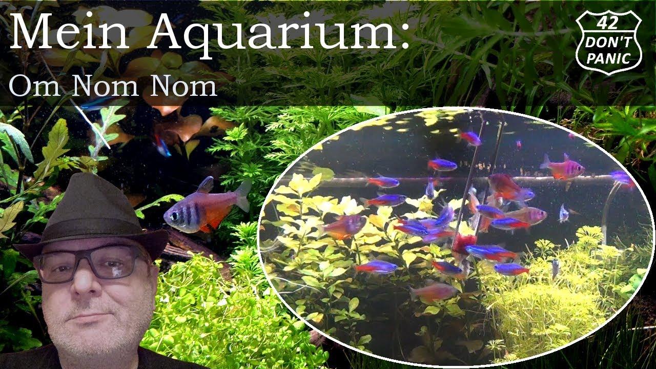 om nom nom fische mit frostfutter f ttern mein aquarium 33 youtube