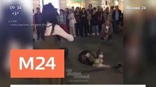 Поющий хаски из Ростова стал звездой Интернета - Москва 24