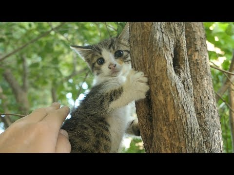 Little kittens hissing and sleep on the tree