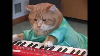 Repeat youtube video Keyboard Cat REINCARNATED!