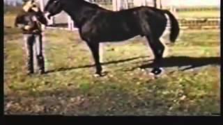 Poco Bueno, Una Leyenda Quarter Horse.