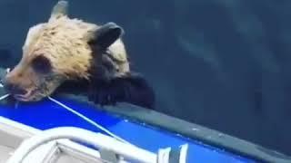 Рыбаки в Карелии спасли из озера медвежонка
