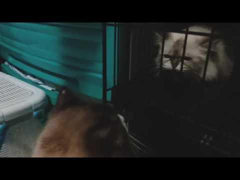 New female cat hissing at Mr. Skittles