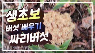 싸리버섯 배우기 #버섯산행 #2020버섯산행 #싸리버섯…