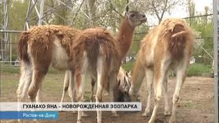 Новости на Дону в 7 30 от 21 апреля 2017 телеканал ДОН 24