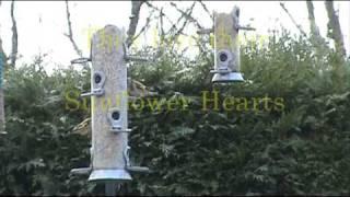 British Garden Birds Feeding