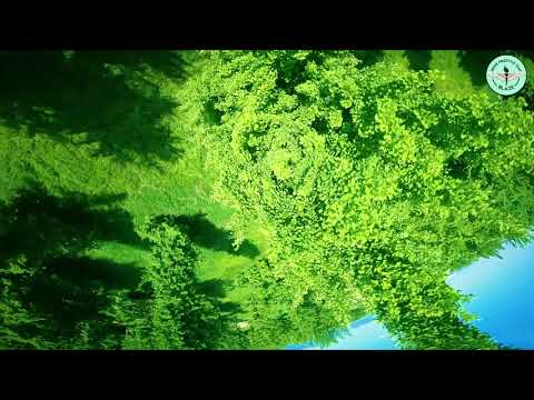 Фото #040 Racing Drone FPV FreeStyle - 은행나무 숲 즐기기(Rev.01)
