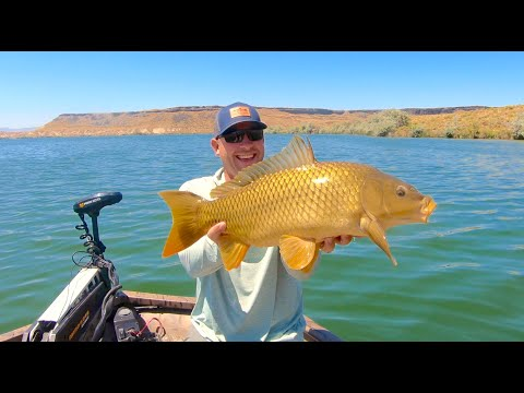 Fly Fishing Idaho's CJ Strike Reservoir | TRR Outfitters Fly Shop & Guide Service
