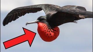 Birds You Won't BELIEVE Exist