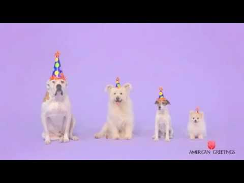 Starring Uggie Woofy Birthday Ecard From American Greetings Youtube