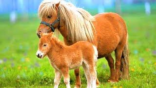 Самая маленькая лошадка в мире! Маленькая лошадка Май литл пони в реальной жизни! Животные для детей