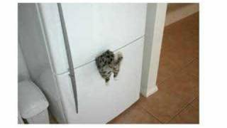 Kill a Kitten - Stephen Lynch