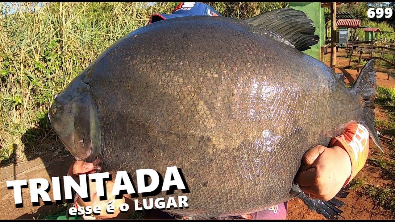 Inverno com Tucunas, Verdes e uma TRINTADA no LAGO VERDE (FISHINGTUR #699)