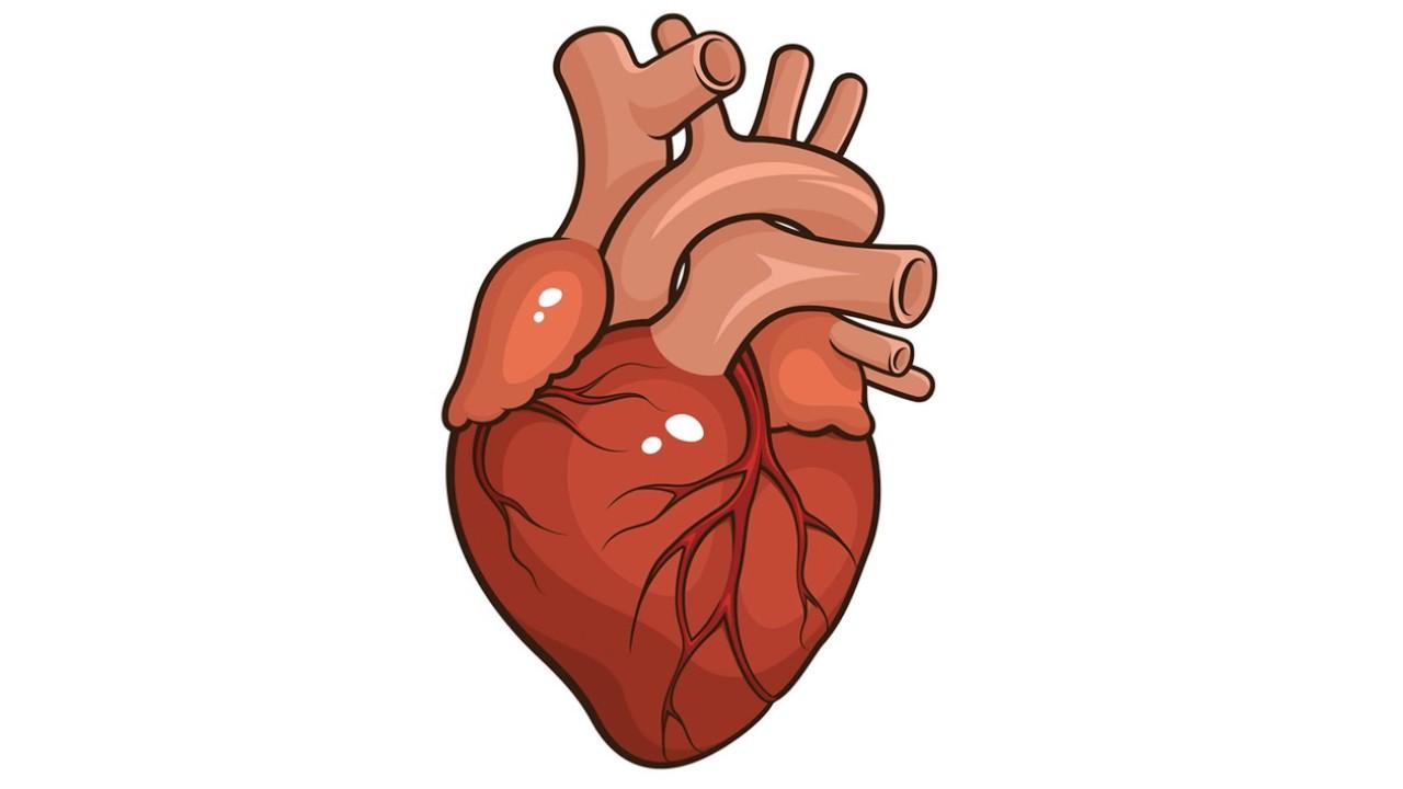 Bits partes del cuerpo interno - YouTube