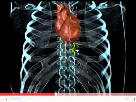 Fisiologia del ejercicio Musculo1 ciencia y deporte org - YouTube