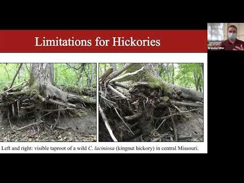 Brandon Miller: Hickories in Horticulture: Developing Novel Nursery Crops