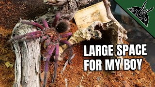 PRETTIEST TARANTULA gets a spacious house!