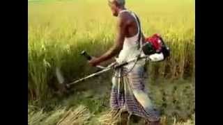 Paddy Rice Cutter ধান কাটার মেশিন thumbnail