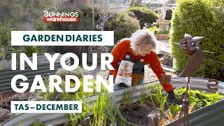 Gardening in December | Tasmania | Bunnings Garden Diary