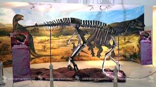 ค้นพบฟอสซิลไดโนเสาร์สายพันธุ์ใหม่ของโลก จ.นครราชสีมา - Springnews