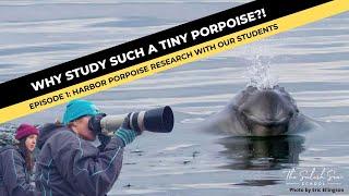 RESEARCH: Harbor Porpoises