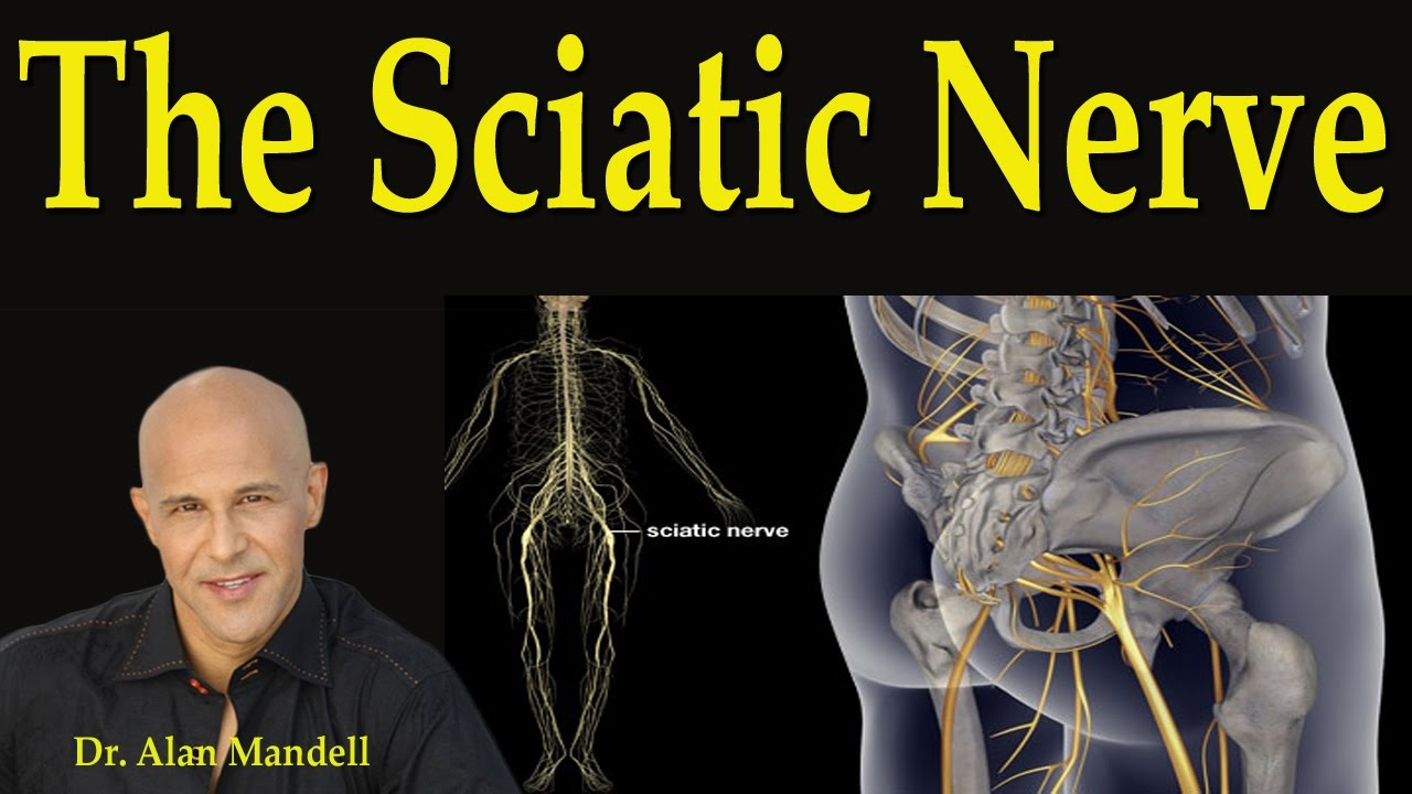 The Sciatic Nerve Dr Mandell Youtube