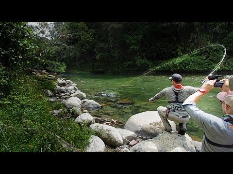 Fly Fishing At Its BEST!!  [New Zealand]