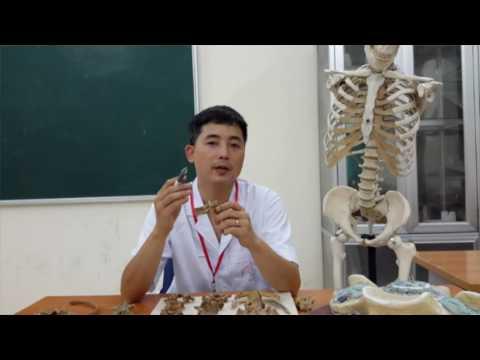 Giải phẫu thực hành Xương của thân