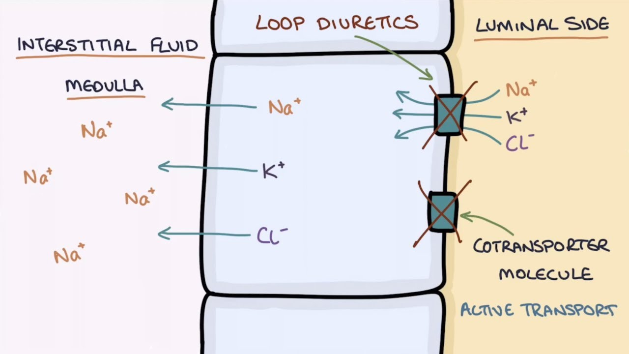 How Does Furosemide Work Understanding Loop Diuretics Youtube