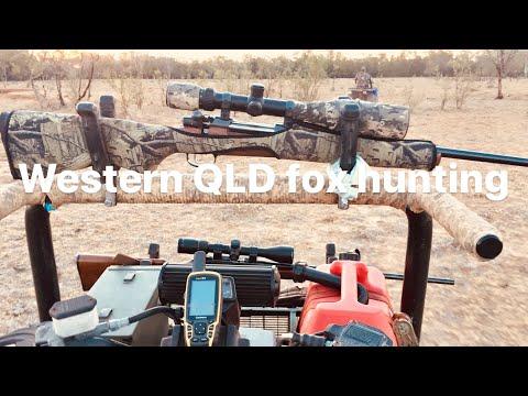 Quad Bike Fox Hunting QLD