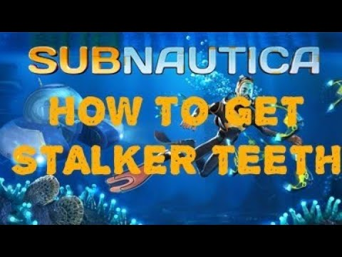 How To Get Stalker Teeth Subnautica Youtube For those who miss the days of yore, please welcome a return of one of qmultimod's best features, the improved and customizable scanner room, now fully compatible with. how to get stalker teeth subnautica
