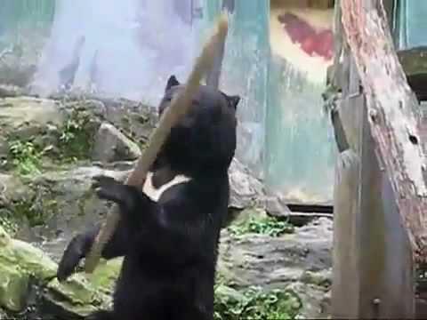 Gấu trúc múa kung fu cực siêu - Chuyện lạ - Dân trí.flv