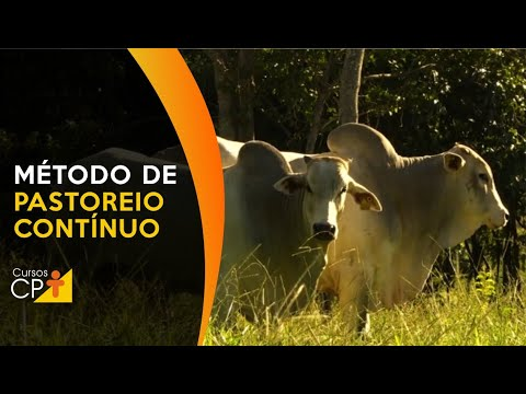 Clique e veja o vídeo Técnicas de Manejo de Pastagens para Pastoreio Contínuo