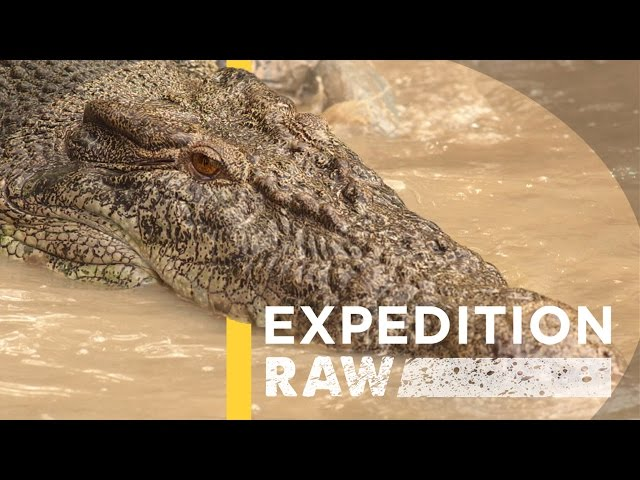 Video From Inside a Crocodile's Mouth (Exclusive) | Expedition Raw