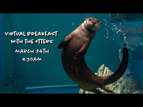 Virtual Breakfast With The Otters