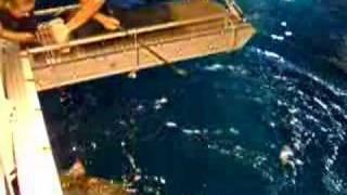 Haaien voeren in Burgers' Zoo