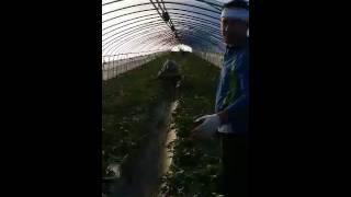 Работа в Корее на арбузах