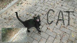 Funny stray cats playing Смешные коты 面白い野良猫の演奏 Panasonic HC WXF1 Test double camera 웃긴 고양이