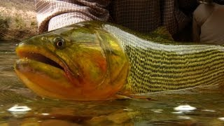 Backcountry Golden Dorado by Todd Moen - Fly Fishing - Issue #17 Catch Magazine