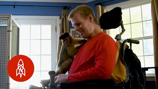 After an Injury, These Primates Will Lend a Helping Hand