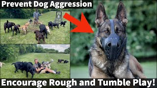 How To Prevent Dog Aggression | Puppies Need Rough and Tumble Play For Proper Socialization