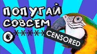 Дерзкий говорящий попугай ругается с хозяйкой! Попугай говорит почти матом)  Talking parrot-macaw)